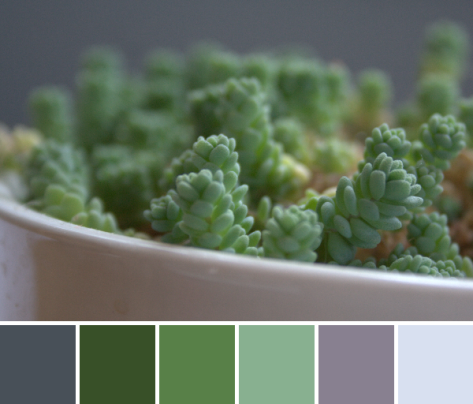 green color palette succulent