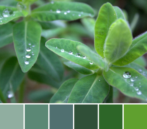 green droplets color palette