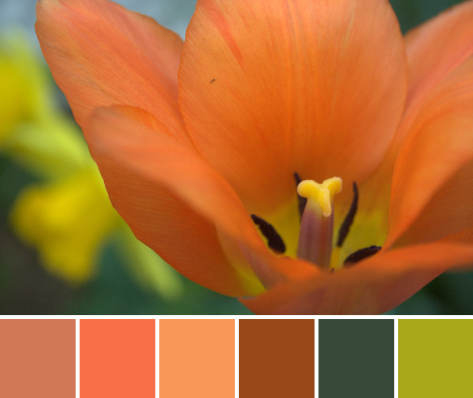 orange tulip color palette