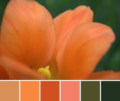 orange tulip color palette