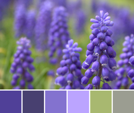 grape hyacinth flower color palette