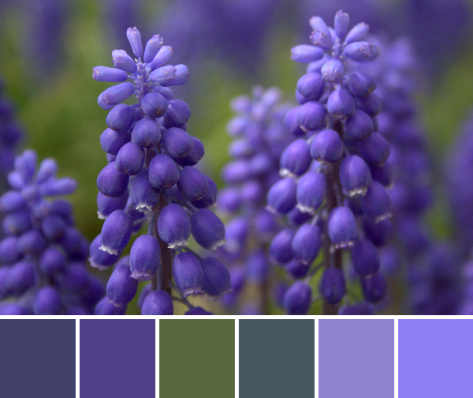 grape hyacinth color palette