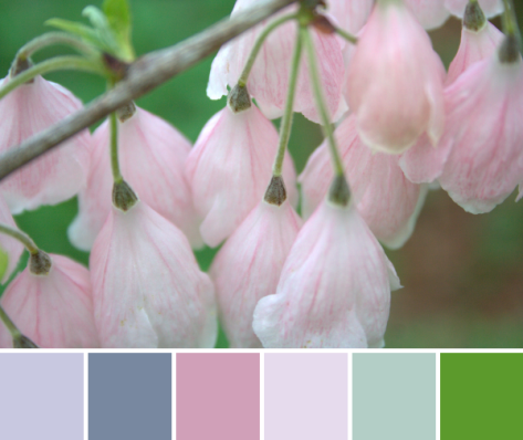 baby pink color palette flowers