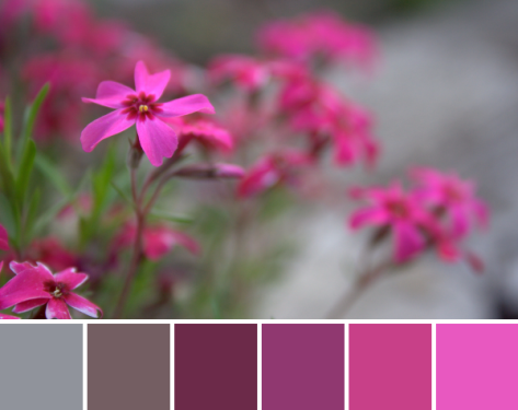 bright pink fuscia color palette flowers