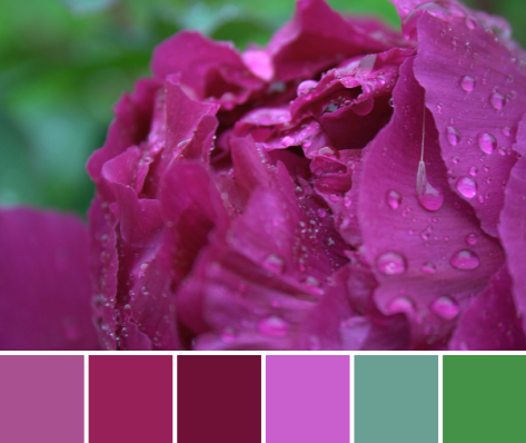 pink peony color palette
