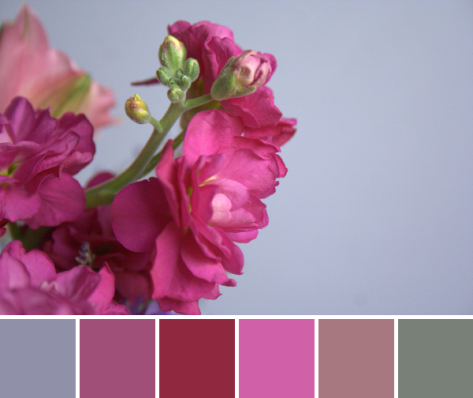 pink flower color palette