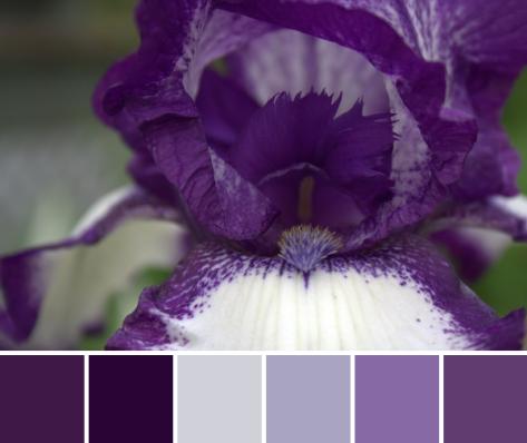 purple iris color palette