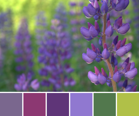 lupine color palette