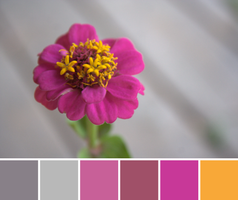 zinnia color palette pink