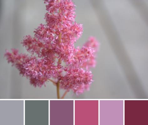 astilbe color palette pink