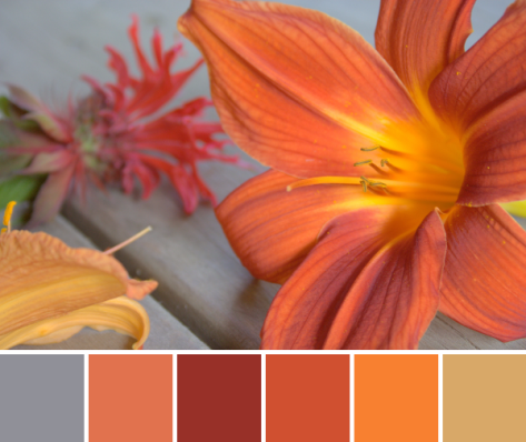 orange flower color palette