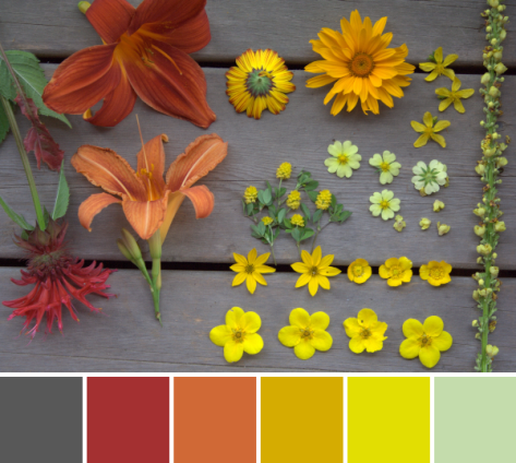 red orange yellow flower scavenger hunt color palette