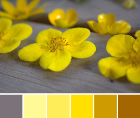 yellow flower color palette