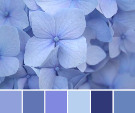 blue hydrangea color palette