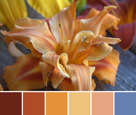 multiple lily orange color palette