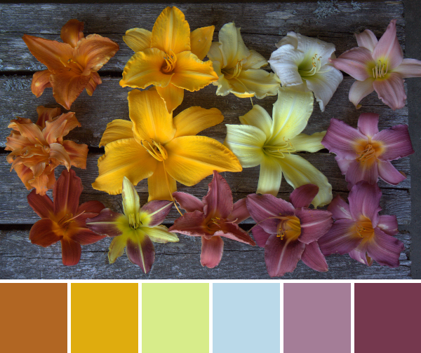 lily color palette