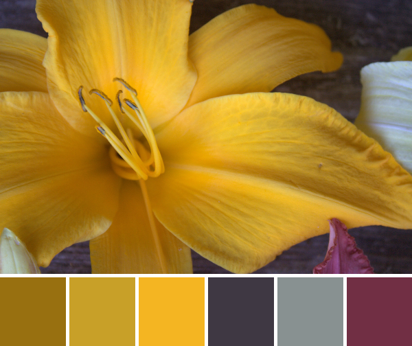 large orange gold lily color palette