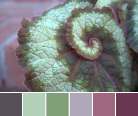 spiral plant color palette