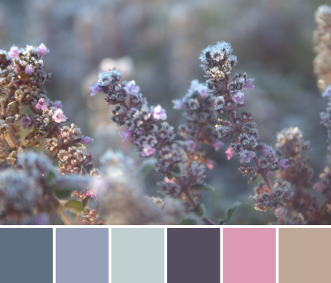 creeping thyme purple color palette frost
