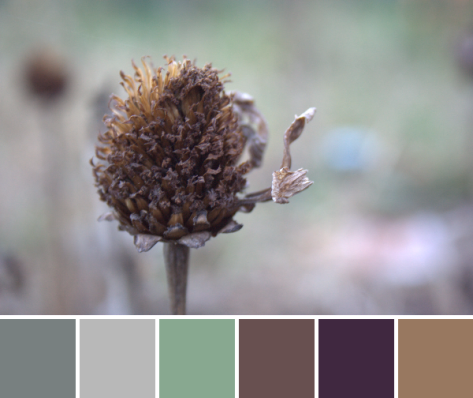 earth tones color palette autumn