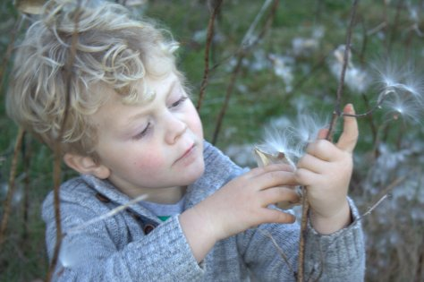 finding the perfect seed pod