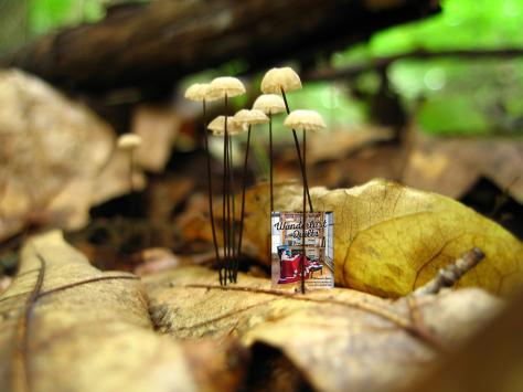 mandalei-mushroom wanderlust quilts