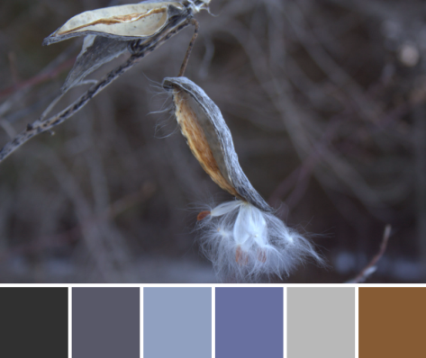 color inspiration color palette