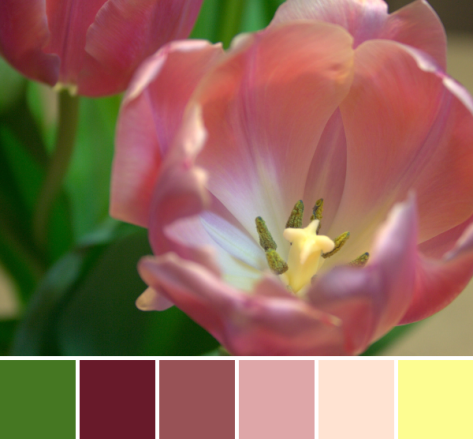 tulips color palette