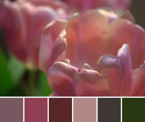 tulip color palette