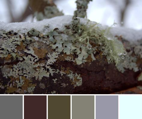snowy lichen color palette