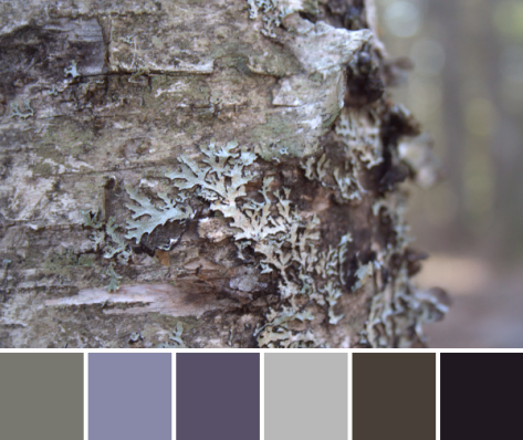 lichen bark color palette