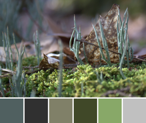 moss color inspiration palette