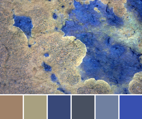 orange blue lichen stone color palette