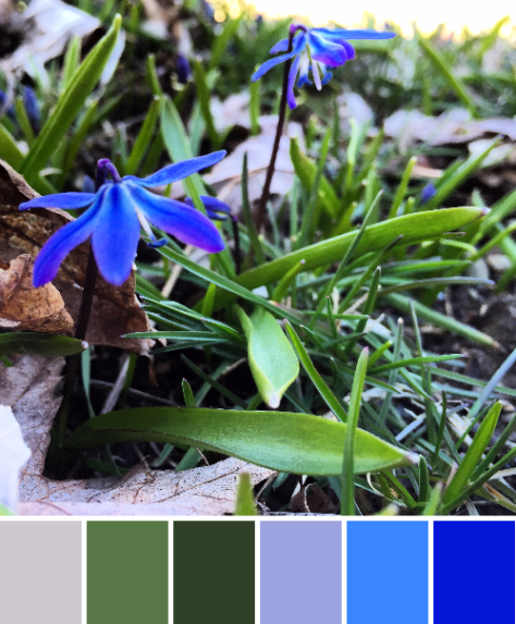 siberian squill color palette maine