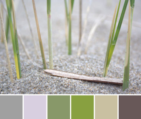 dune grass beach color palette