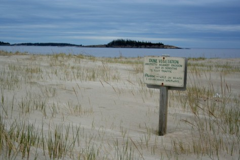 beach grass sand dune popham beach maine