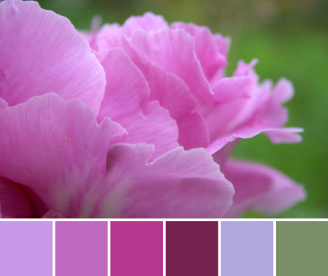 pink peony color inspiration palette