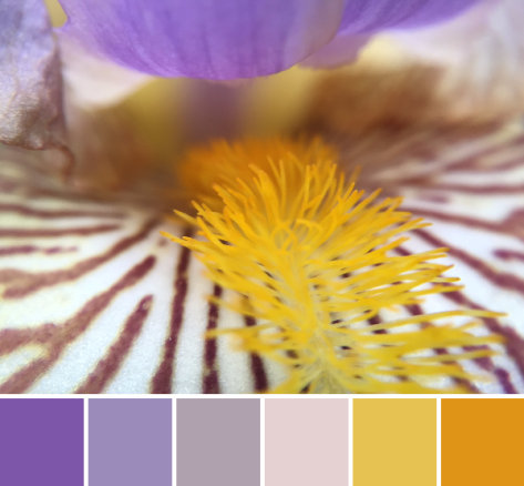 iris color palette purple gold