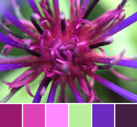 purple star flower palette