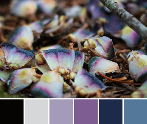 purple blue color palette nature