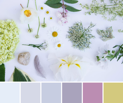 white flat lay color palette nature