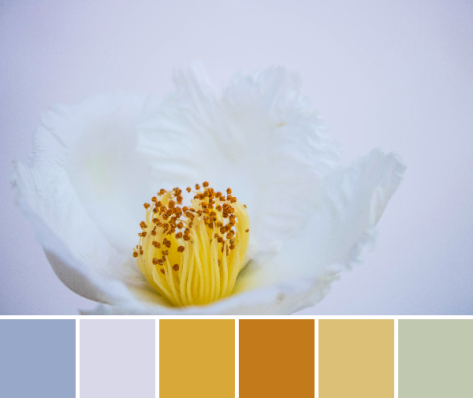 white attempt yellow color palette