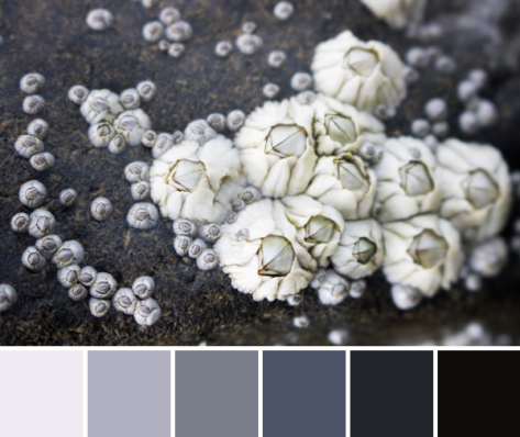 grey barnacles color palette