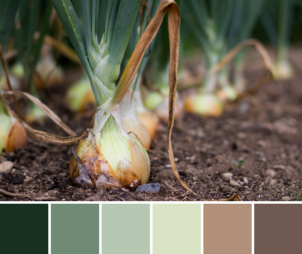 onions earthy color palette