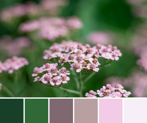 yarrow soft pink palette