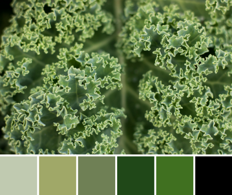 kale color palette
