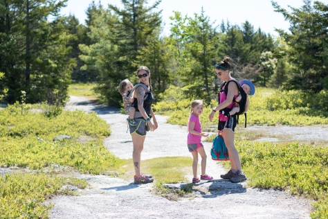 great pond mountain hike