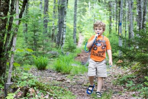birdsacre trails ellsworth maine summer adventure quilt
